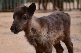 £75 to adopt a reindeer with entry for two people to the Paradise Wildlife Park in Broxbourne, Hertfordshire, from Buyagift
