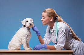 £29 instead of £549.98 (from Oplex Careers) for an online veterinary assistant and animal nursing course bundle - save 95%