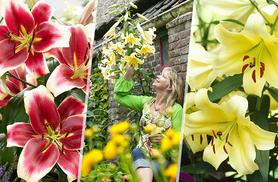 £8.99 instead of £14.99 (from You Garden) for 15 jumbo collection lily bulbs - save 40%