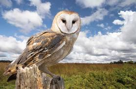 £18 for a 3-hour owls and eagles experience for 1 person including a hot drink and slice of cake, or £29 for 2 people at the Birds of Prey Centre - save up to 77%