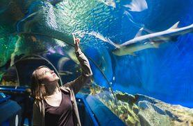 £99 for an overnight stay at the Holiday Inn Express Birmingham South for up to 2 adults & 2 children inc. breakfast & National SEA LIFE Centre tickets - save up to 34%