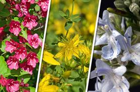 £18.99 instead of £29.99 (from You Garden) for a hardy 10-plant shrub collection - jazz up your garden and save 37%