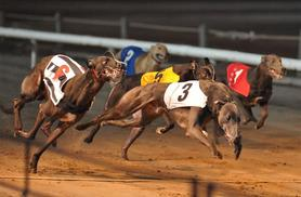 £6 instead of £12.40 for a night of greyhound racing, including admission, race card, meal and a drink at Coventry Stadium - save 52%