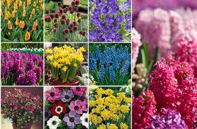 £19.99 (from Blooming Direct) for a bumper autumn bundle containing 501 bulbs in 9 varieties!