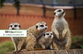 £39 instead of £99 for a one-hour meerkat experience for two with Will's Wild Animal Encounters - save 61%