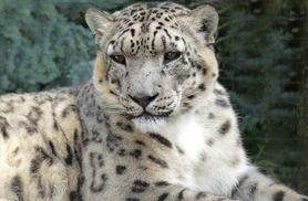 £84 for a breakfast with big cats experience and park entry for two people at Paradise Wildlife Park from Activity Superstore!