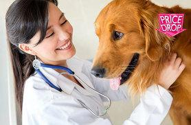 £29 instead of £299.99 (from Oplex Careers) for an online CPD-accredited veterinary support assistant course - save 90%