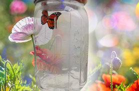 £9 (from Photo Video Direct) for a butterfly in a glass jar toy!