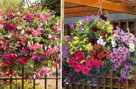 £24.99 for two easy-fill hanging baskets and 24 assorted plug plants - save 32%