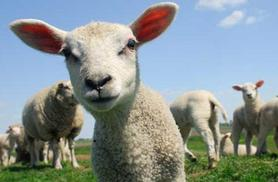 From £4.50 for a bank holiday or May Day County Fair ticket to Lower Drayton Petting Farm, Staffordshire - save up to 45%