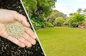 £5.99 instead of £7.99 (from Dobies Premium) for a bag of rapid green self-repairing lawn seed, £9.99 for two bags - save up to 25%