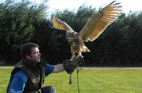 From £14 instead of £35 for a 90-minute falconry experience for one person, £25 for two people at Fixter's Falconry, Lincolnshire - save up to 60%