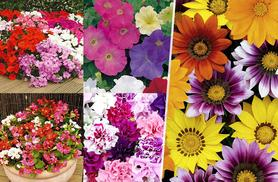 £10.99 (from Dobies of Devon) for a pack of 135 bedding plant plugs, £23.99 for 360 - save up to 44% + DELIVERY INCLUDED!
