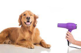 £19 instead of £295 (from Kickstudy) for an accredited pet grooming online course - save 94%