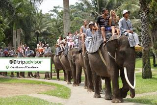 From £1199pp for a 5* 10-night Bali break, flights, elephant safari & bathing experience, tours, transfers, meals and more, or pay a £500 deposit today - save up to 28%