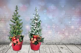£8.99 instead of £19.99 (from You Garden) for a pair of miniature decorated Christmas trees - pre-order your trees & save 55%