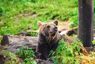 From £379pp for a three-night break in Romania with a bear experience, flights, cable car & wine tasting!