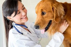 £39 instead of £349.99 (from Oplex Careers) for an online CPD-accredited veterinary support assistant course - save 89%