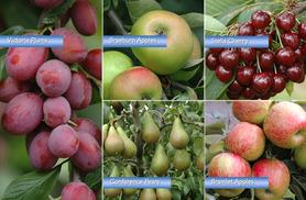 £17.99 (from You Garden) for 3 fruit trees (apple, pear, plum), £22.99 for 4 (+ cherry), or £26.99 for 5 (+ cooking apple) - save up to 60%