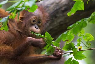 £799pp for an 8-day tour of Borneo inc. an orangutan sanctuary visit, jungle walk and more from On The Go Tours!