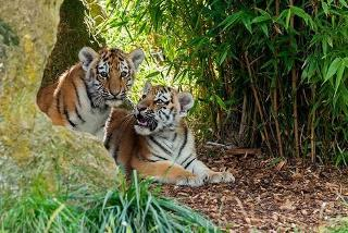 From £899pp (with iFly) for a 7-night Golden Triangle tour including flights, tiger safari, elephant ride & 4* accommodation, from £1099pp with 5* accommodation
