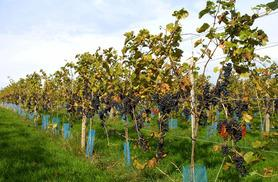 £24 for 2 tickets to a vineyard tour and wine tasting experience from Into the Blue - choose from 10 locations!