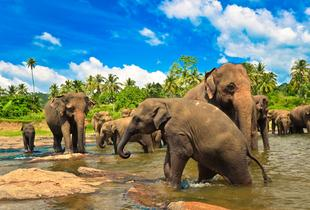 £699pp (from Calypso Lanka Holidays) for a 9nt Sri Lanka private tour in 3* accommodation or £1099pp in 4* and 5* accommodation - check out 5 World Heritage sites!