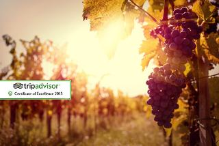 From £129 (at Sedlescombe Organic Vineyard) for a wine tasting and lunch for two people, followed by a luxury overnight stay with breakfast - save up to 43%