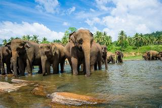 From £299pp (with Travel Center) for a 4nt Sri Lanka tour, from £559 for 8nts, from £799 for 4nts with return flights or from £959 for 8nts with flights - save up to 40%
