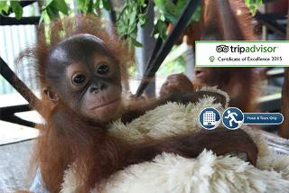 £799pp instead of £1095pp (from The Great Projects) for a two-week all-inclusive Borneo orangutan, tribe and rainforest experience - save up to 27%