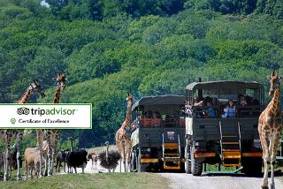 £399 for a two-night safari glamping stay with a twist and stunning views overlooking cheetahs and black rhino's for up to six people at Bear Lodge, Kent - save 43%