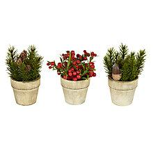 Buy John Lewis Potted Pine and Berry Trees, Mini, Assorted Online at johnlewis.com