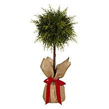 Buy John Lewis Topiary Tree Online at johnlewis.com